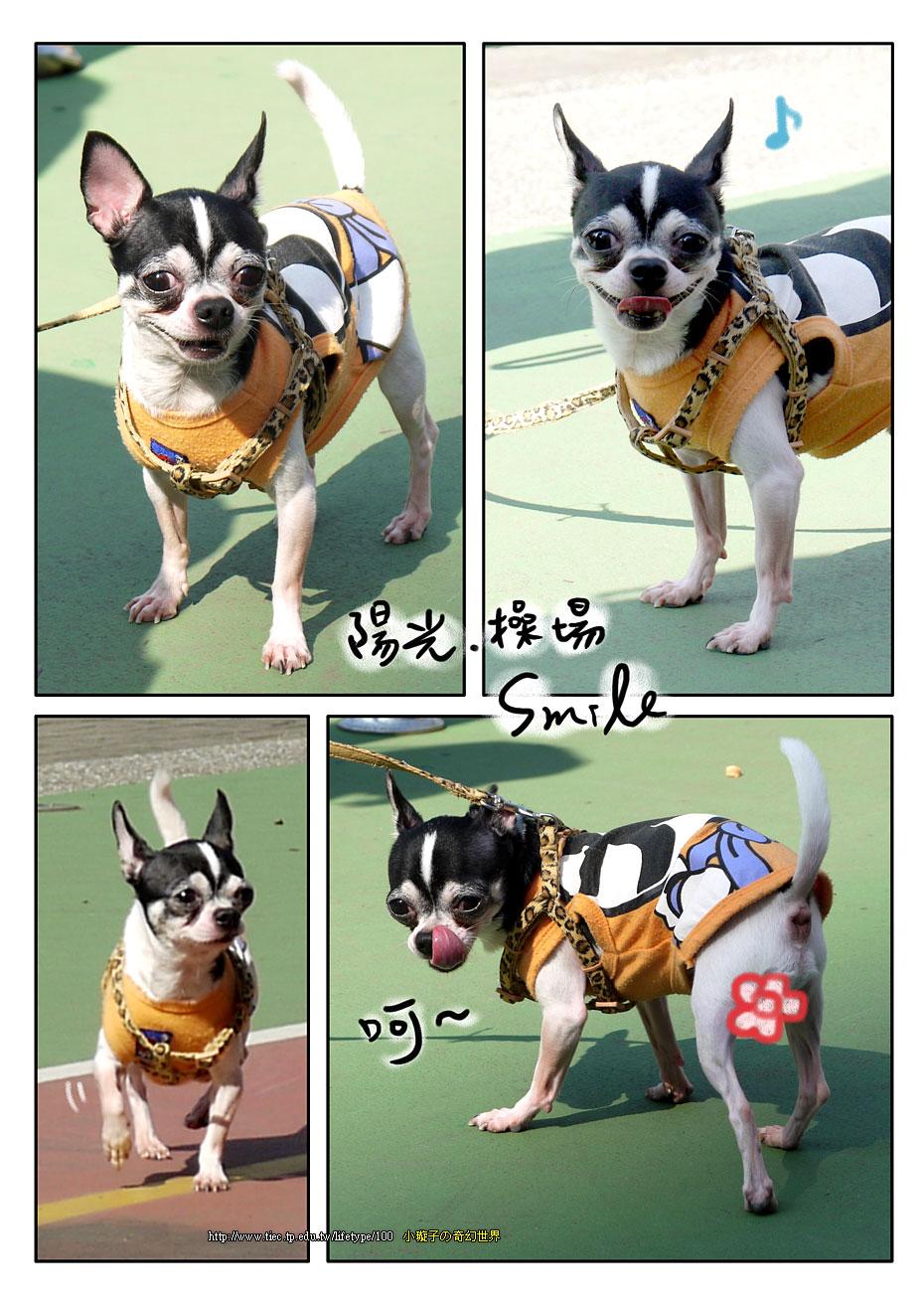 201012dog_6.jpg